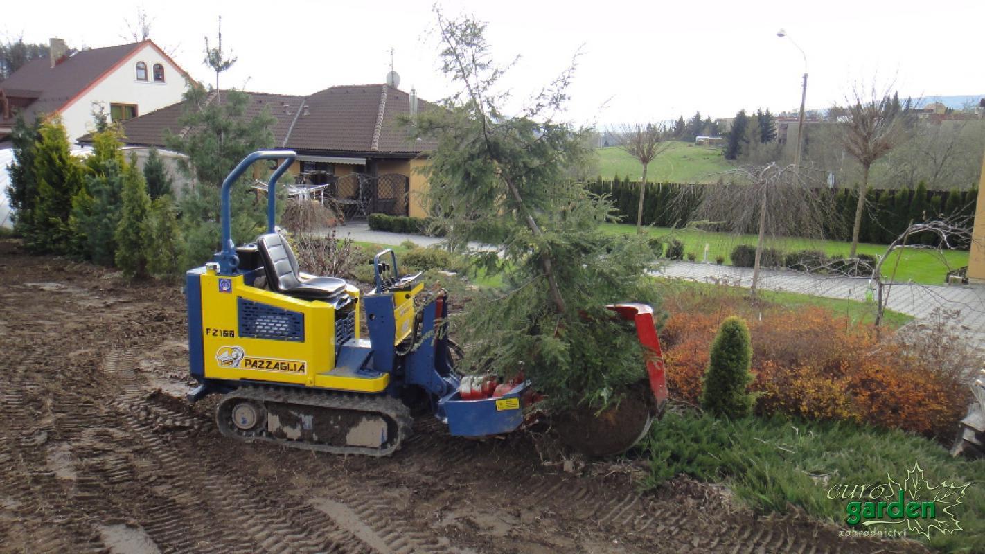 Přesazování vzrostlých stromů a keřů