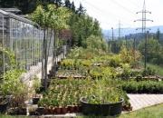 zahradnictvi_13