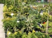 zahradnictvi_32