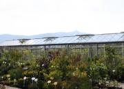 zahradnictvi_35
