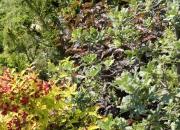 zahradnictvi_45