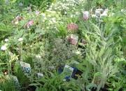 zahradnictvi_51