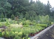 zahradnictvi_53