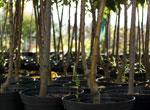 Prodej rostlin